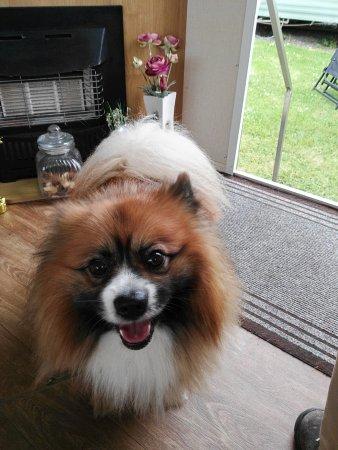 Killorglin, أيرلندا: Pet Friendly