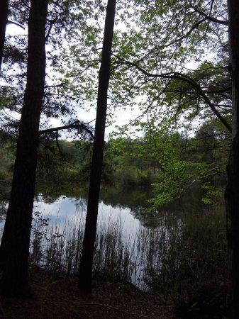 Millville, DE: pond view SeaHawk Trail