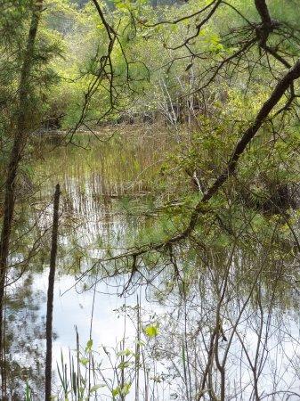 Millville, DE: SeaHawk Trail