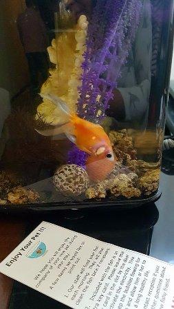 Maximilian Hotel : Un pez dorado para hacernos compañía