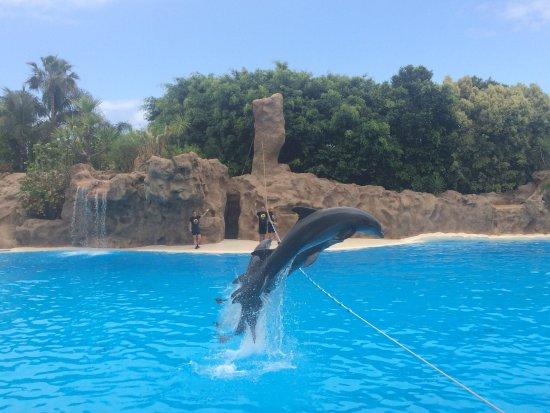 Delfin show picture of loro parque puerto de la cruz tripadvisor - Loro parque puerto de la cruz ...