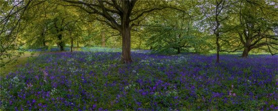 A beautiful woodland scene in spring from Kew gardens