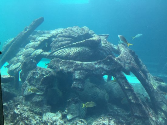 Foto de Marine Habitat at Atlantis