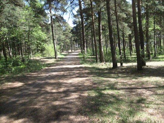 Äijänniemi Beach: Äijänniemen rannan vieressä on laaja metsikkö, jossa on kuntopolkuja