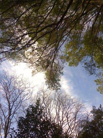Languedoc-Roussillon, ฝรั่งเศส: Ним: какое небо голубое
