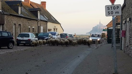 Ardevon, Frankrike: Sheep in the morning - hotel on the right