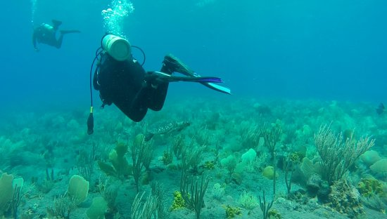 Saba Divers: Turtle diving with us !