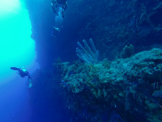 Saba Divers: tent reef wall, just amazing !