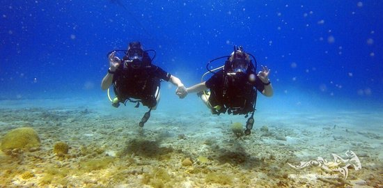 Relaxed Guided Dives Photo
