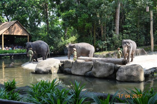 elephant show picture of singapore zoo singapore tripadvisor. Black Bedroom Furniture Sets. Home Design Ideas