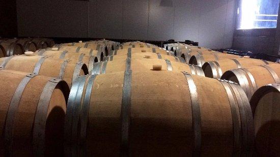 Pizzorno Family Estates: Barricas de roble llenas de vino.