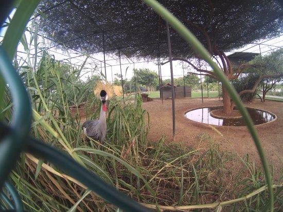 Hambantota, Sri Lanka: неизвестная птица