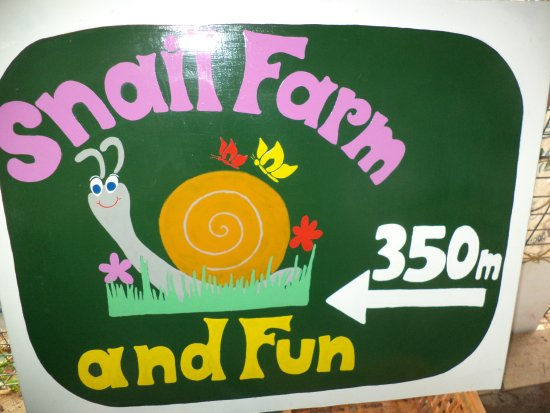 Snail Farm and Fun