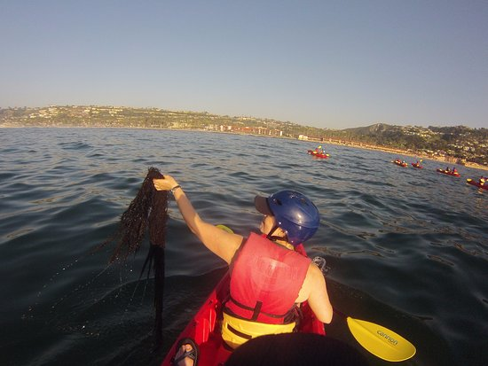 Seaweed Souvineer Picture Of Bike And Kayak Tours La