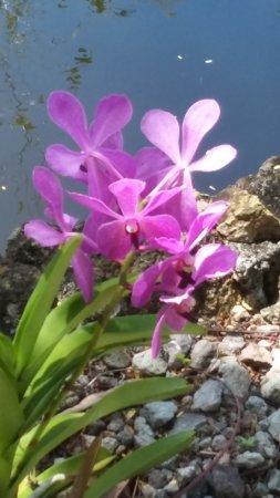 Nevis Imagem