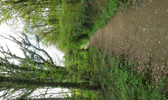 Haw Park Wood