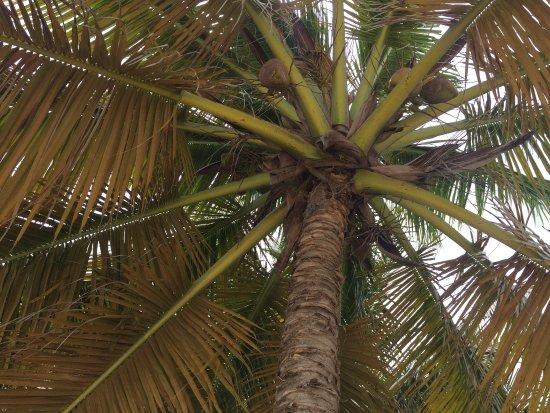 Bayahibe, Dominikana: photo0.jpg