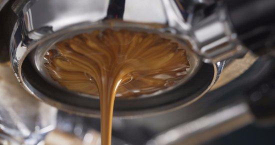Osprey, Flórida: Best Espresso in town