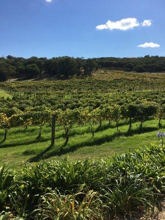 Cape Naturaliste Vineyard
