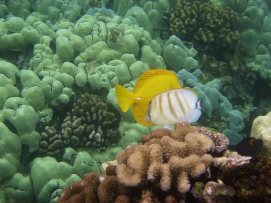 Honaunau, HI: snorkeling pics