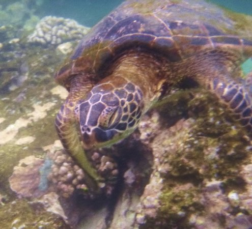 Honaunau, Hawái: snorkeling pics