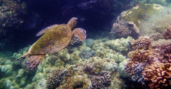 Honaunau, Χαβάη: snorkeling pics
