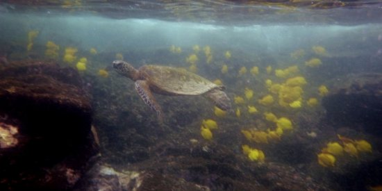 Honaunau, Havai: snorkeling pics