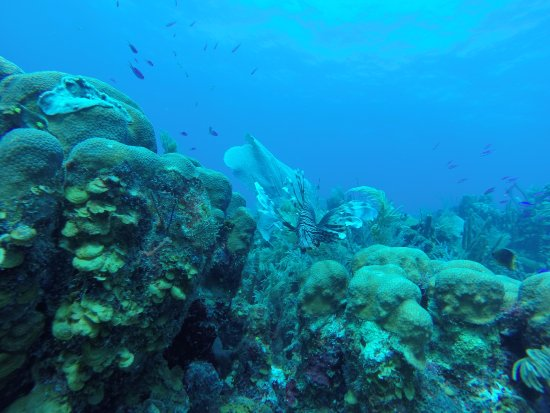 Glovers Reef Atoll 이미지