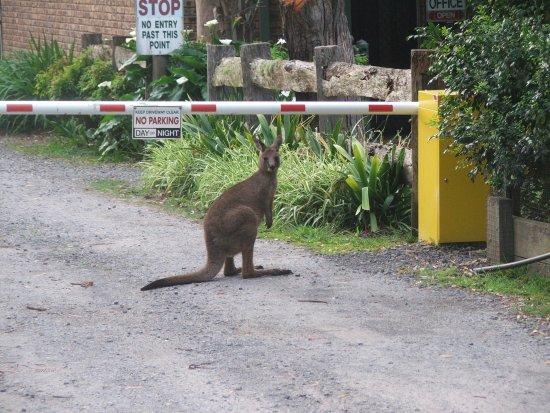 Huskisson, Australia: just checking in