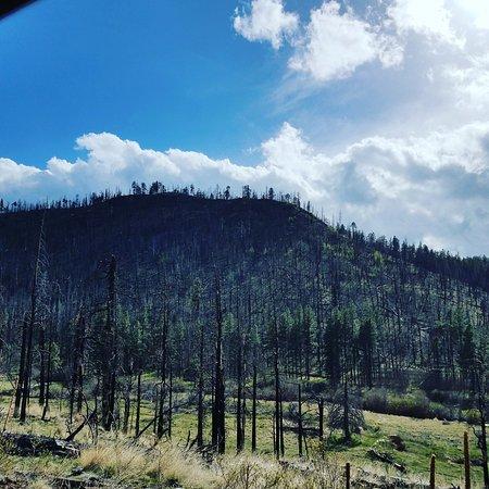 Greer, AZ: IMG_20170427_170544_407_large.jpg