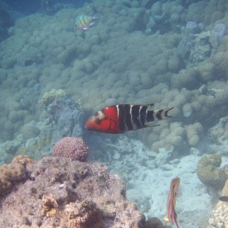 Palawan Island, Philippines: Sea life around the reef near one of the small islands off the coast #3