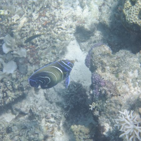 Culion, Filipiny: Sea life outside the shoreline (outside the sandbar) #2