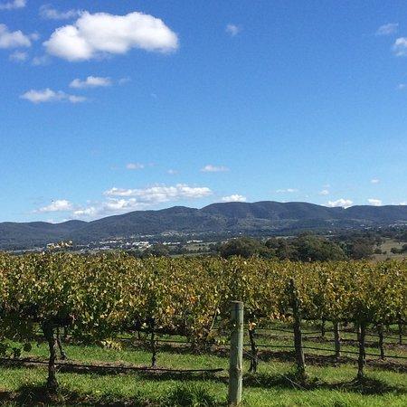 Mudgee, Australien: Views