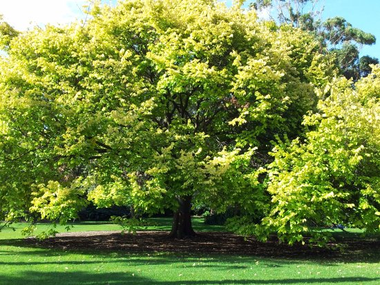 Williamstown Botanic Gardens