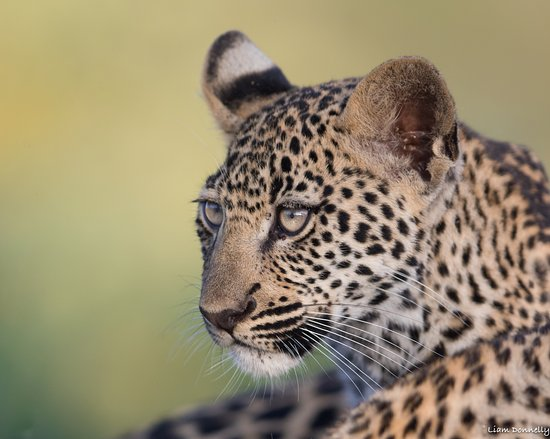 Ulusaba Safari Lodge: Wildlife