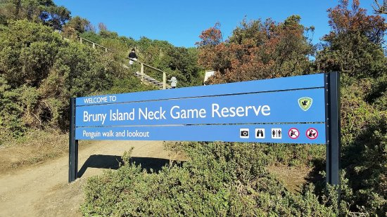 Bruny Island Neck - don't be put off by all the steps - it's a relatively easy climb