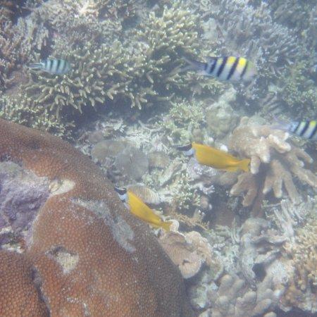 Бусуанга, Филиппины: Under water images off of Calumbuyan Island #1