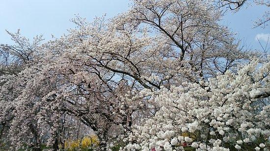 Shibata-machi Φωτογραφία