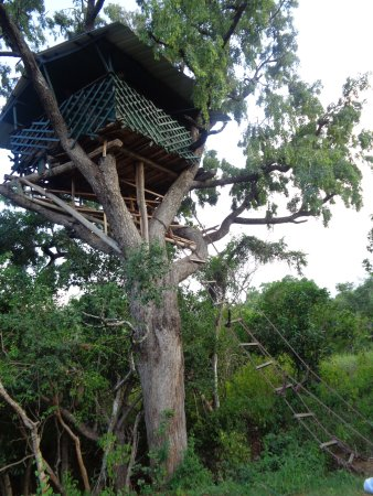Chinnar Wildlife Sanctuary: Karakkad tree house