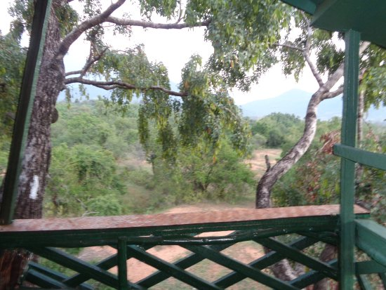 Chinnar Wildlife Sanctuary: view form tree house