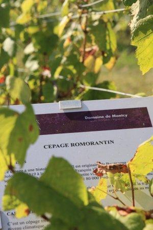 Domaine de Montcy - Terra Laura: Conservatoire des Vignes : Visite Libre et Gratuite