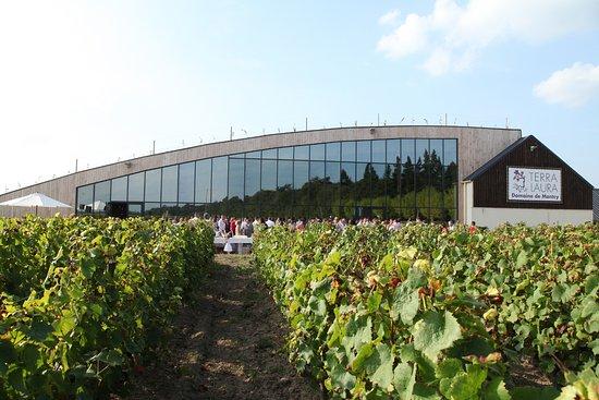 Cheverny, فرنسا: Salle De Réception au milieu des vignes