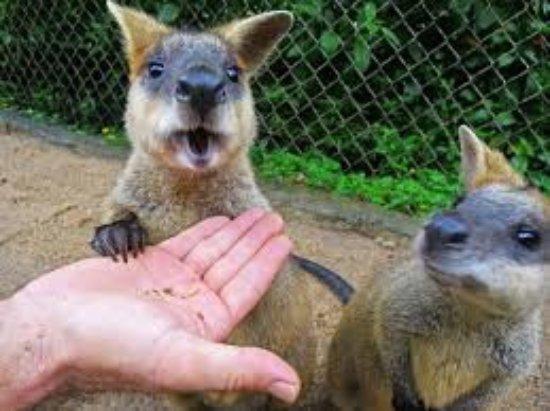 Amazon World Zoo Park : photo0.jpg