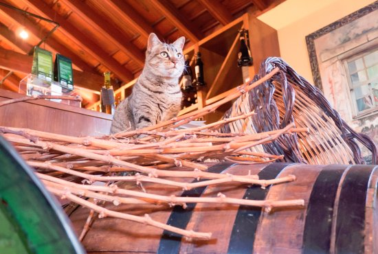 Casa Del Vino La Baranda : Tasting room supervisor!