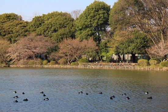 Zempukuji Park