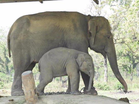 Kathmandu Valley, เนปาล: Elephant Breeding Centre at Chitwan