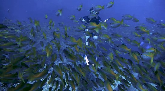 Easy Divers - Koh Tao