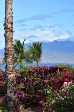 Aston Maui Hill: photo1.jpg