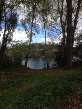 Taverham Mill Nature Reserve and Fishery