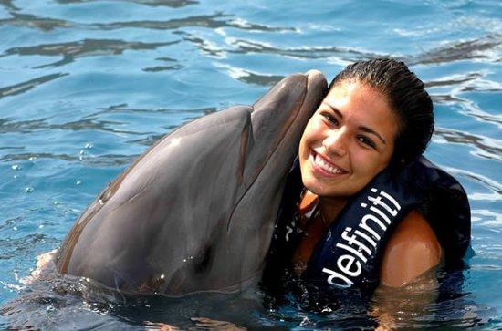 Sharm Dolphins